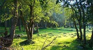 Proprietà boschiva
